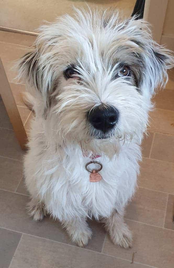 Chippenham Dog Walker