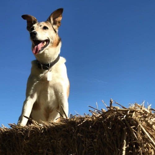 Dog on hay bale