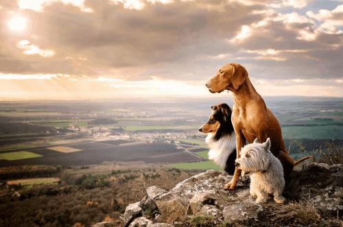 Dogs Unite Event