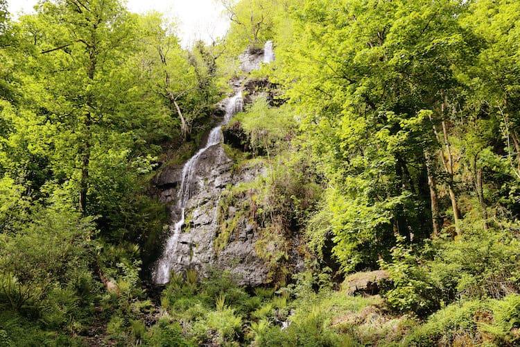 Canonteign Waterfalls Dog Friendly Devon