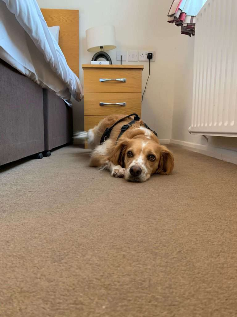 The Mayfield House Hotel Dog Friendly Wiltshire