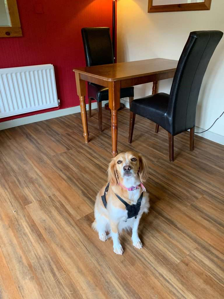 The Mayfield House Hotel Dog Friendly The Cotswolds