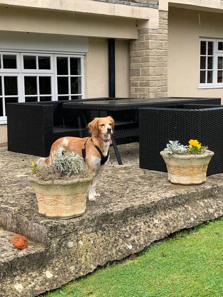 The Mayfield House Hotel Dog Friendly Garden