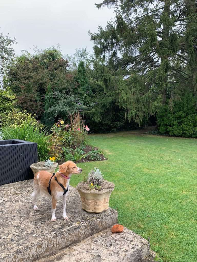 The Mayfield House Hotel Dog Friendly Cotswolds