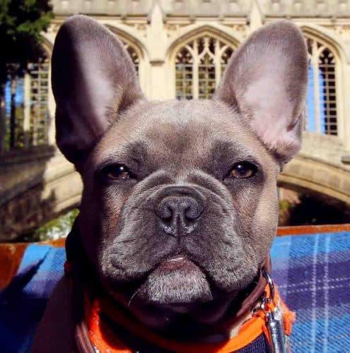 Scholars Punting Dog Friendly Cambridge