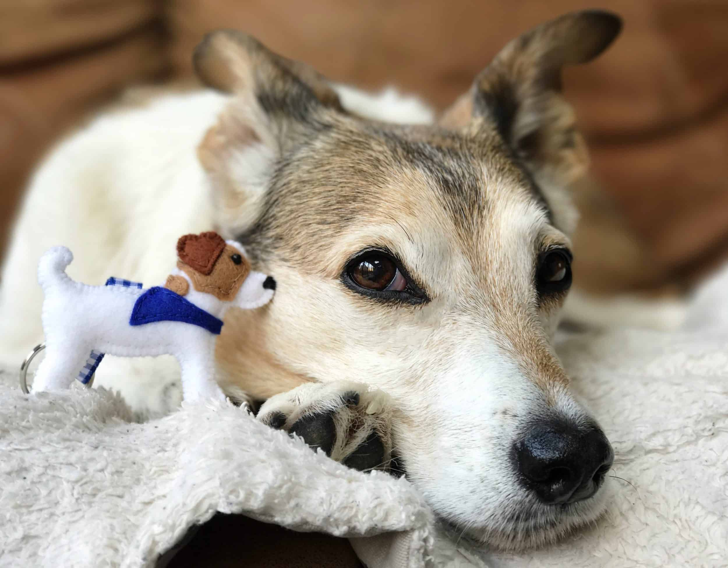 Misheleneous Handmade Dog Gifts