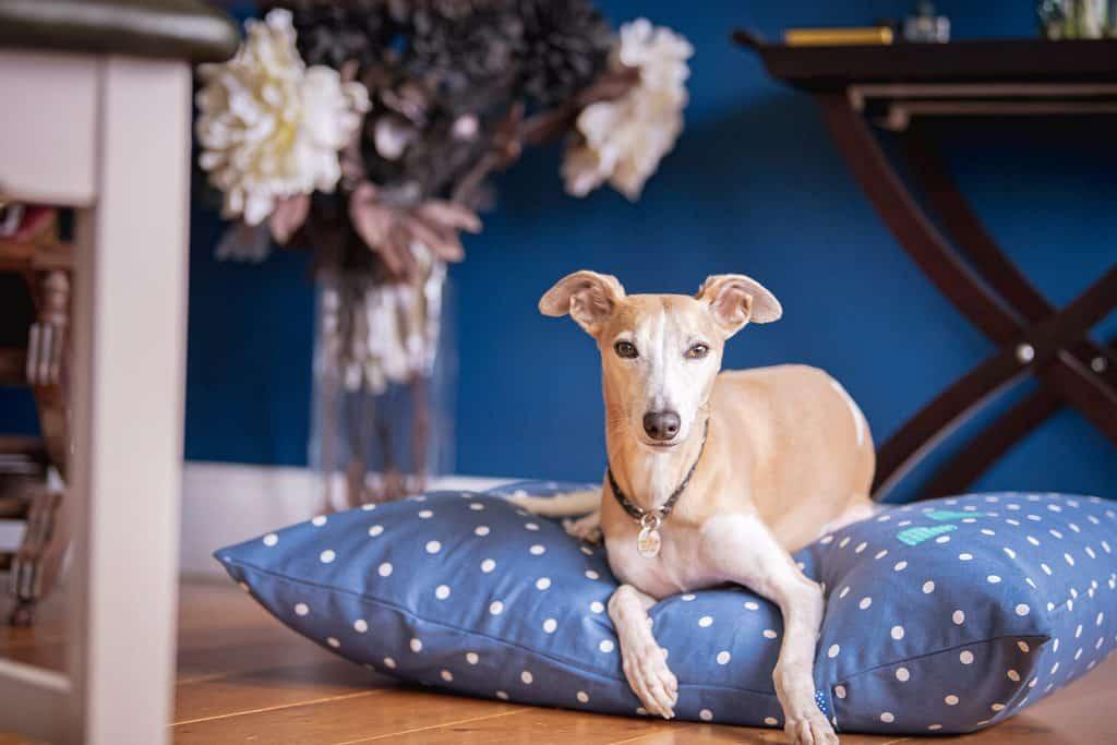 Luxury Dog Bed Slumbering Hound