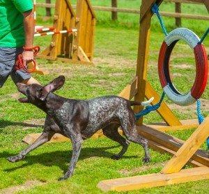 dog-agility-450x400
