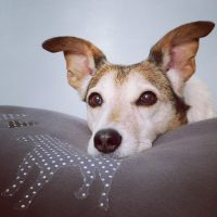 Slumbering Hound Dog Bed