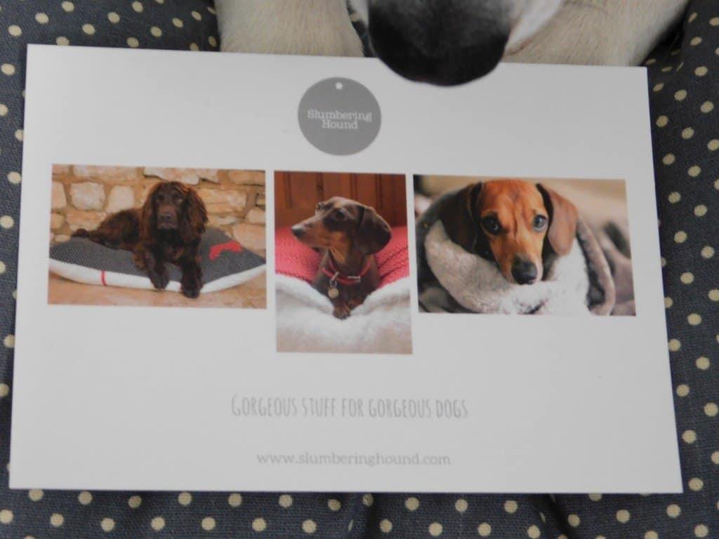 Slumbering Hound Postcard
