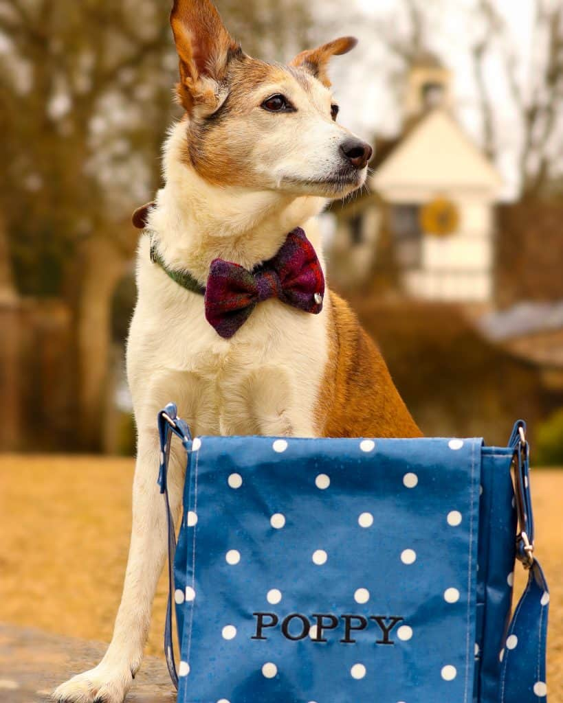 The Cosy Canine Company Dog Walking Bag