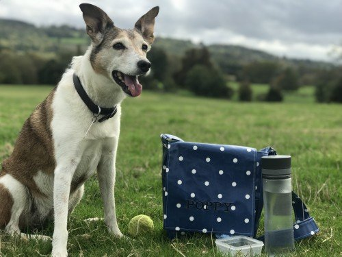 The Essential Dog Walking Bag