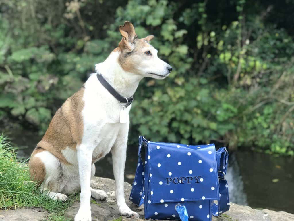 Dog with Personalised Bag