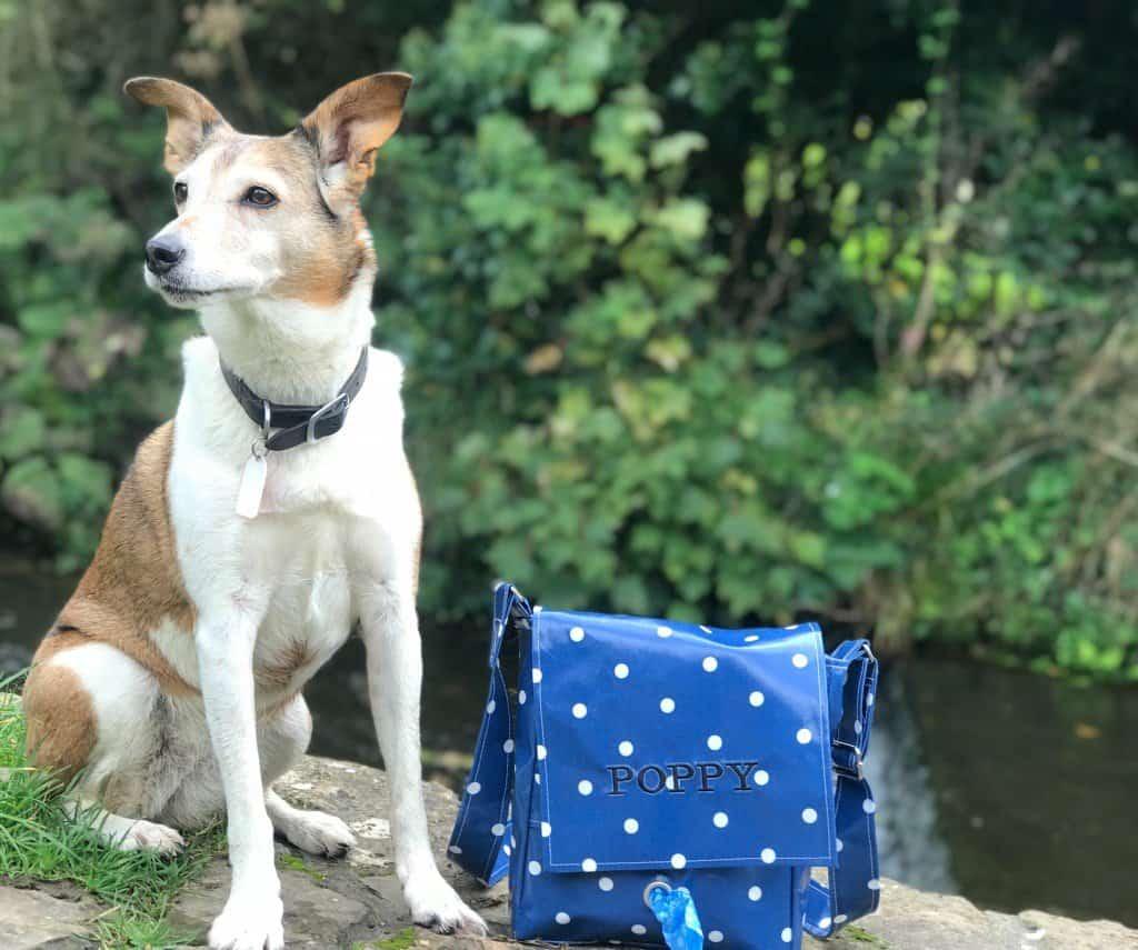 Dog with walking Bag