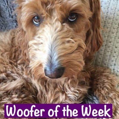 Woofer of the Week