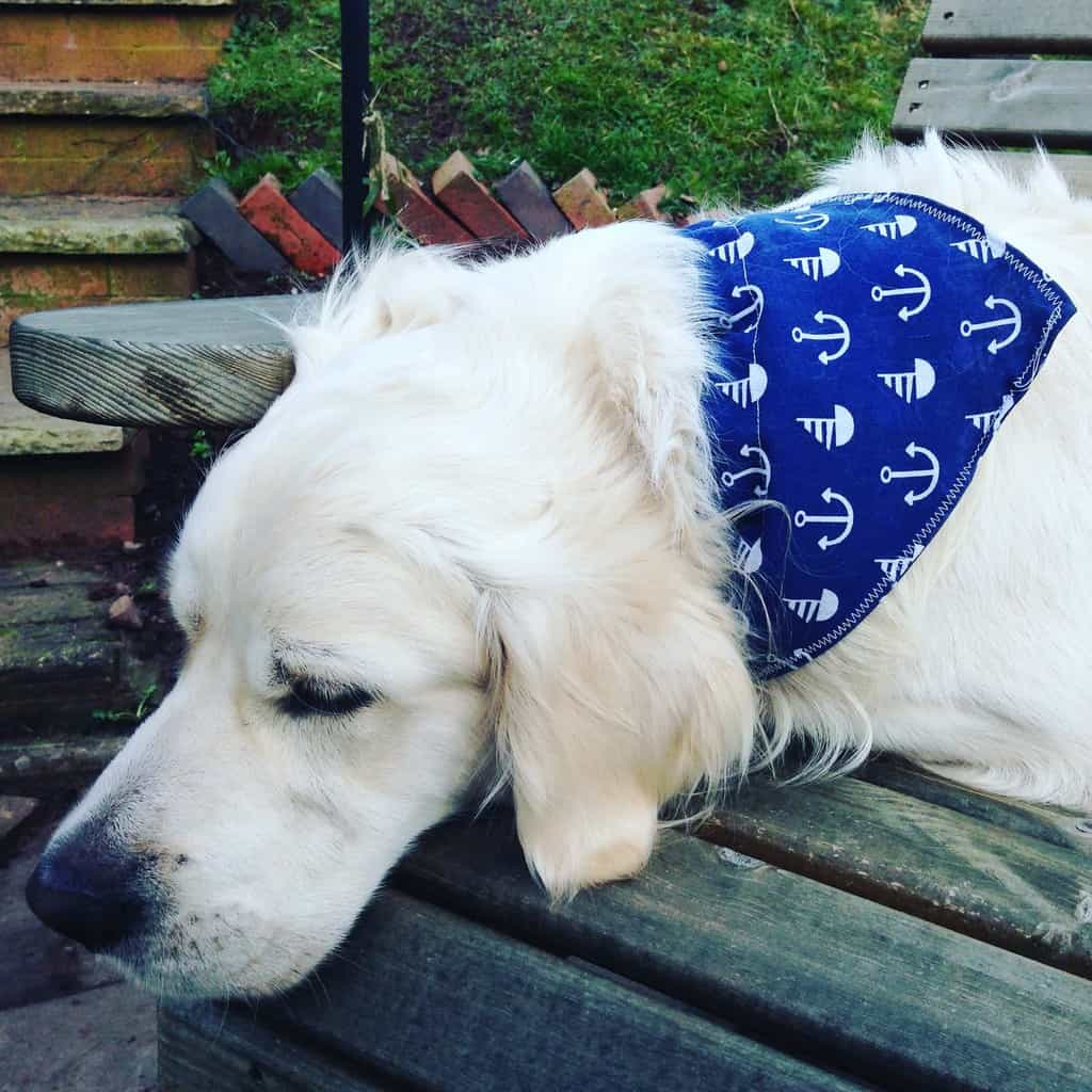 Dog in Blue Bandana from Kelstitch Designs