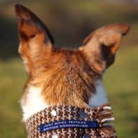 Just Wool Textiles Handwoven Dog Scarf