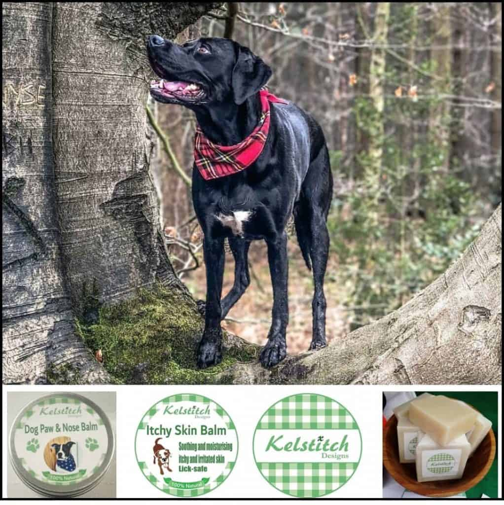 Dog in Tartan Bandana from Kelstitch Designs