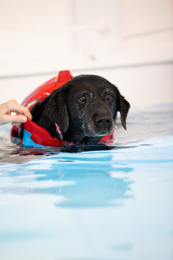 Lucy Pet Carer Hydrotherapy Pool