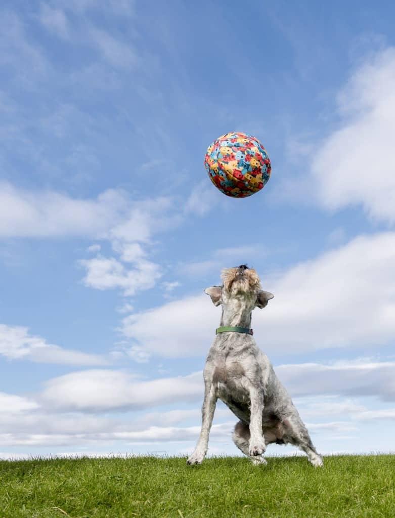 Pet Ball United Dogdom