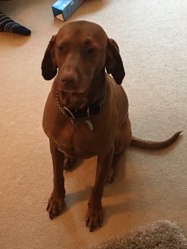 The Coquetvale Hotel Resident Dog Rosie