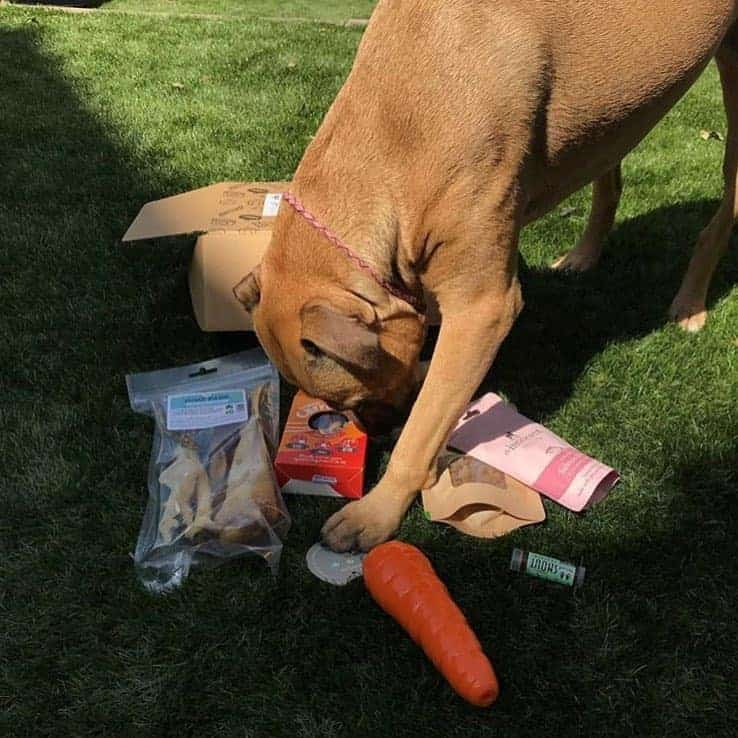 Collar Club Sustainable Dog Subscription Box