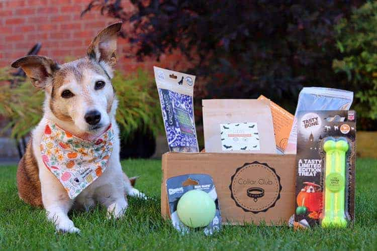 Photograph of Dog with Collar Club Subscription Box