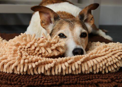 Soggy Doggy Dog Mitt Shammy
