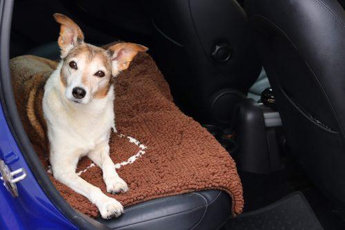 Soggy Doggy Car Rug
