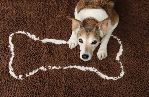 Soggy Doggy Mats for Dogs