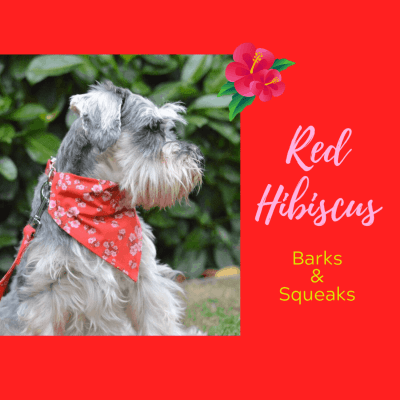 Barks and Squeaks Red Hibiscus Dog Bandana