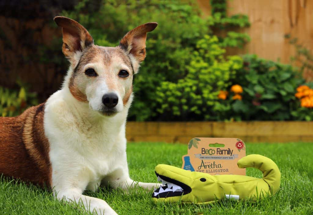 Collar Club Doggy Subscription Box