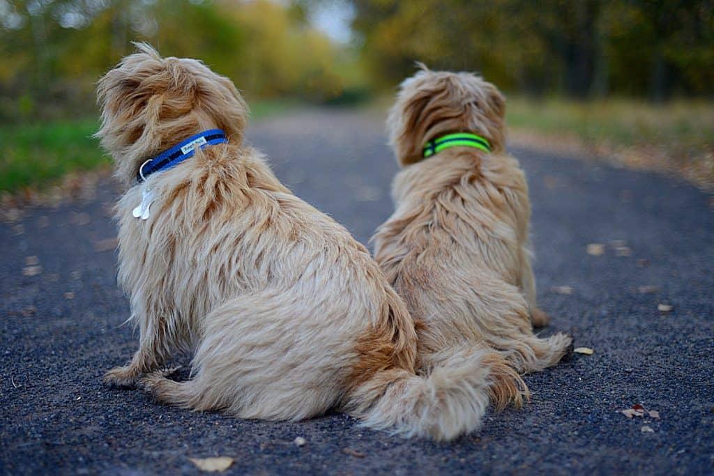 Reg & Bob Dog Collars and Leads