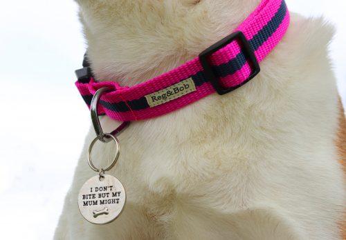 Reg & Bob Dog Lead and Collar