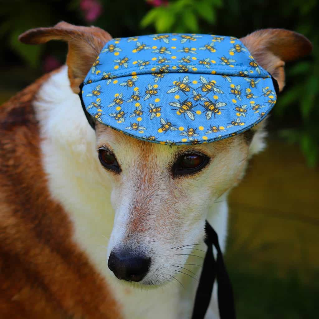 Barks and Squeaks Doggy Hats