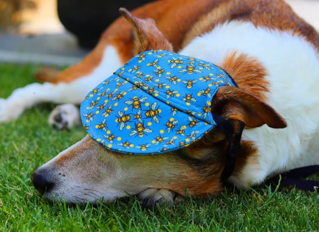 Doggy Cap