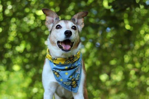 Barks and Squeaks Reversible Bandana