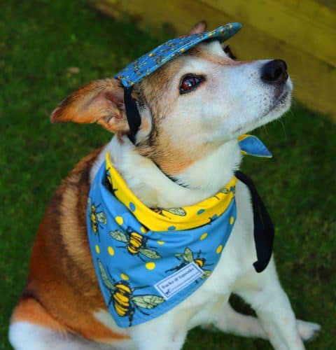 Barks and Squeaks Dog Hat and Bandana