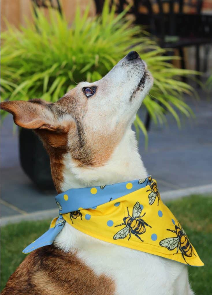 Barks and Squeaks Reversible Bandana