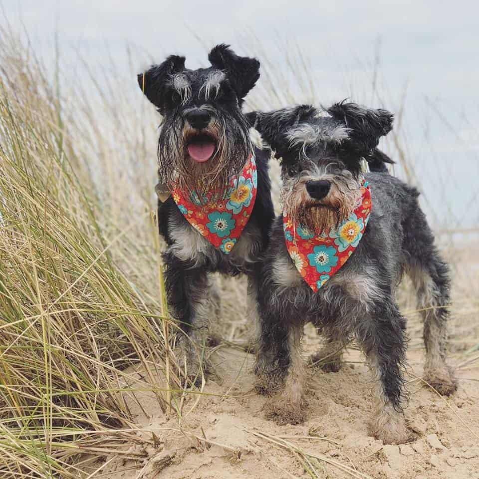 Moo Moo and Bear Dog Collars and Leads