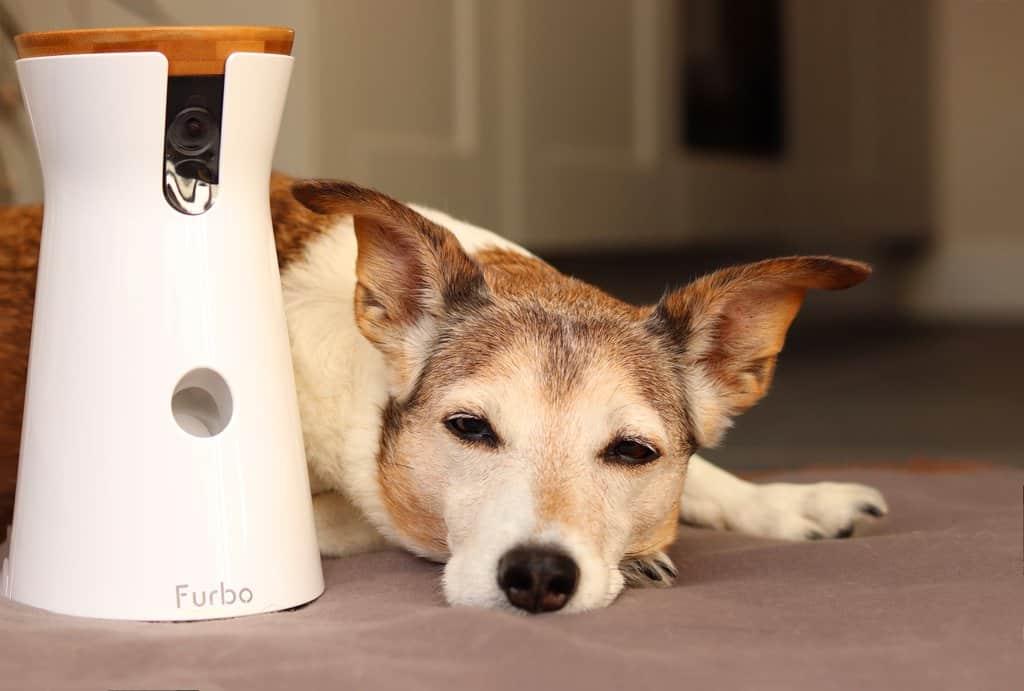 Furbo Dog Camera Blog