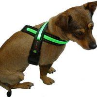Martan LED Dog Collar