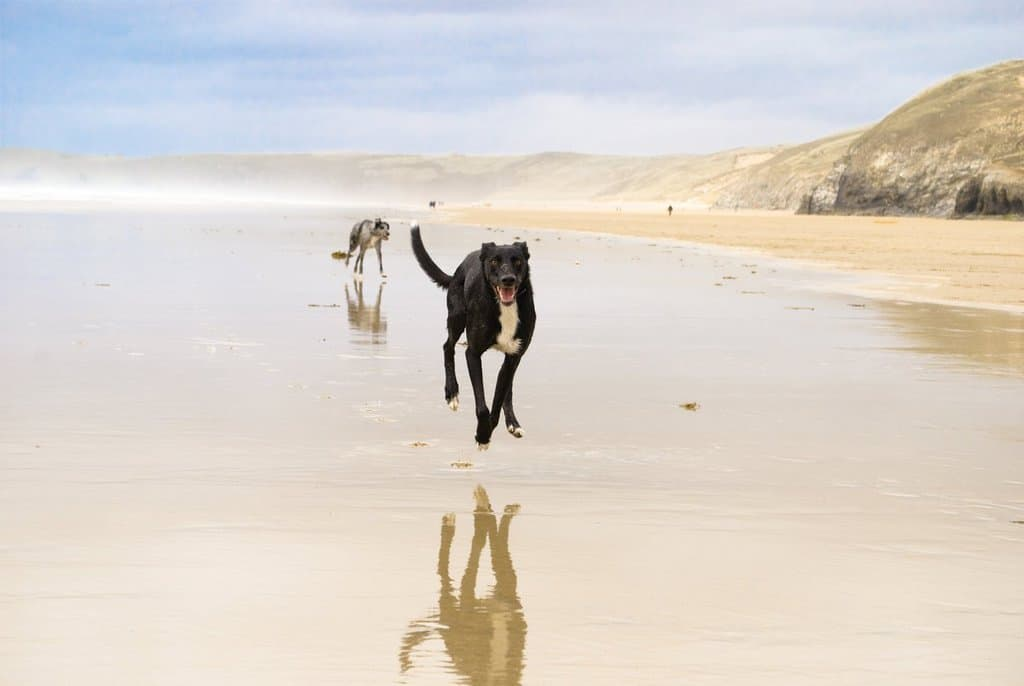 Budock Vean Hotel and Spa Dog Friendly Cornwall