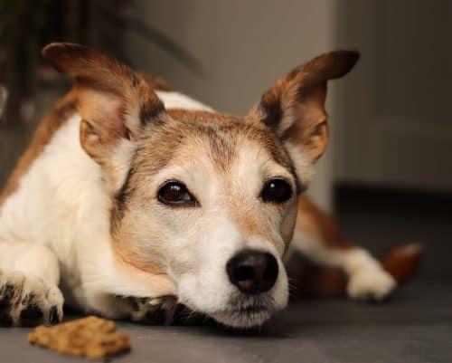 Cobbydog Optimum Cold Pressed Dog Food with TurmerAid