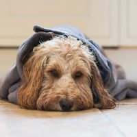 Paws and Presto Dog Drying Solutions