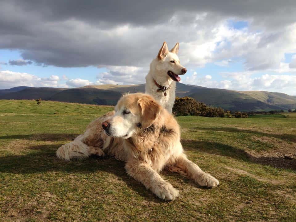Craig y Nos Castle Dog Friendly Wales