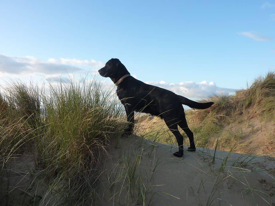 Glebe Farm Rhossili Bay Dog Friendly Gower