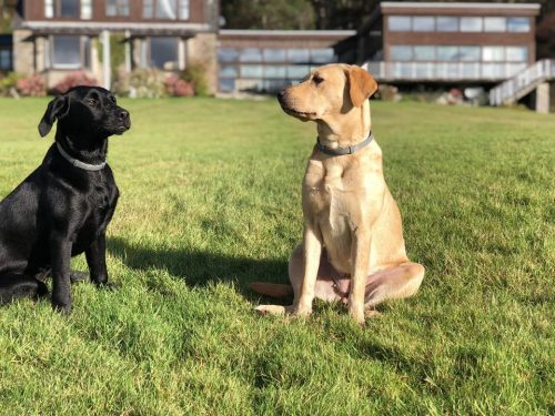 Crispie Estate Pet Friendly Self Catering Accommodation Argyll