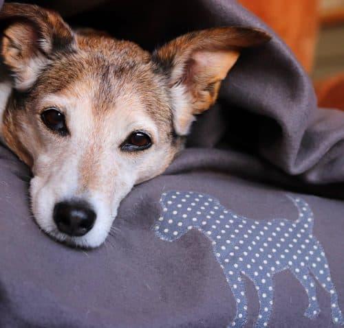 Slumbering Hound Snuggle Blanket
