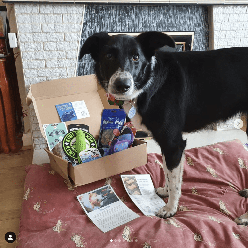 Boxes By Buddy Dog Subscription Box